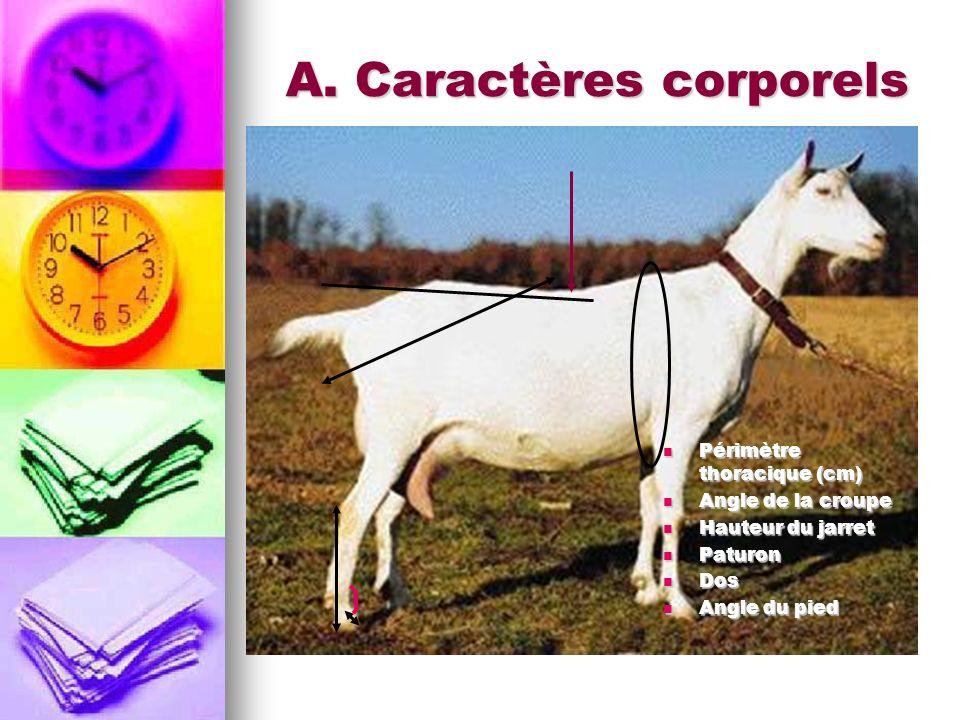 A. Caractères corporels