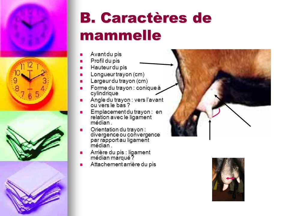 B. Caractères de mammelle