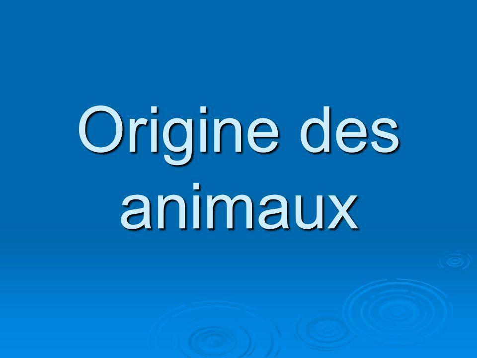 Origine des animaux