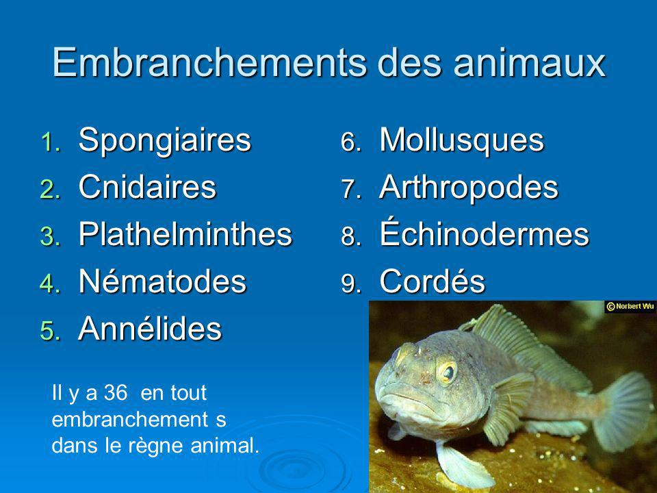 Embranchements des animaux