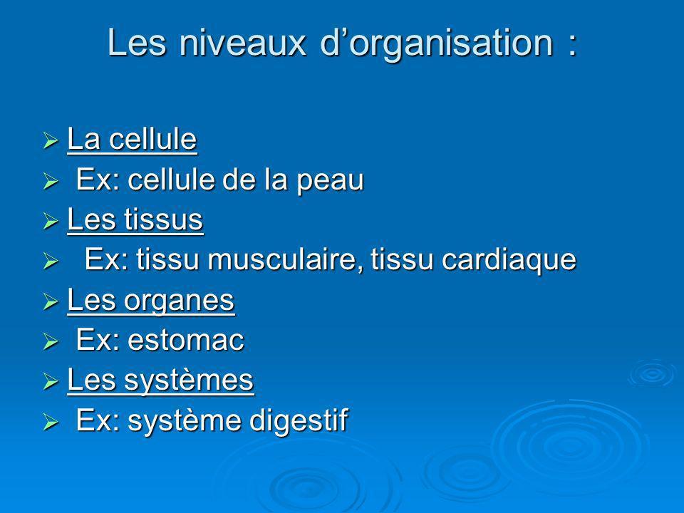 Les niveaux d'organisation :