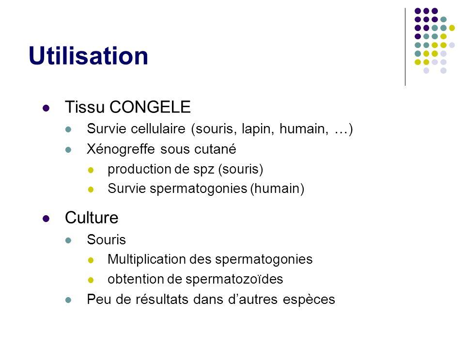 Utilisation Tissu CONGELE Culture