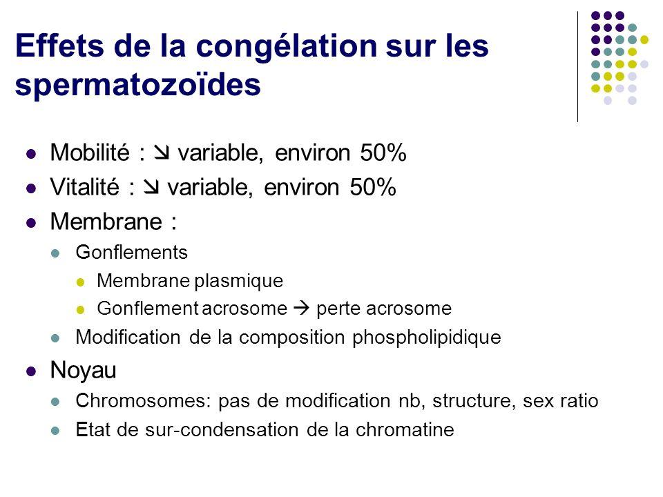 Effets de la congélation sur les spermatozoïdes
