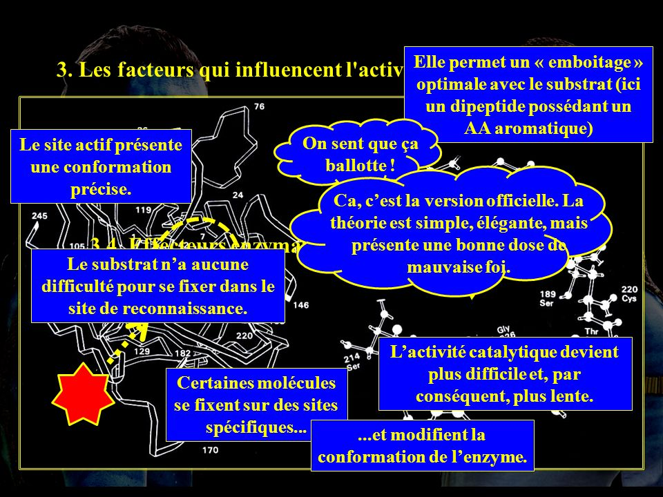 3.4.1 INC 3. Les facteurs qui influencent l activité enzymatique.