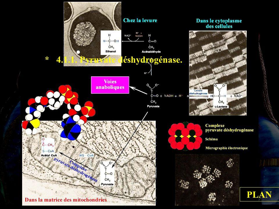 4.1.1 * 4.1.1. Pyruvate déshydrogénase. PLAN