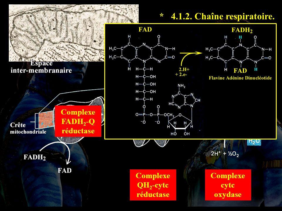 4.1.2 suite * 4.1.2. Chaîne respiratoire. Complexe FADH2-Q réductase