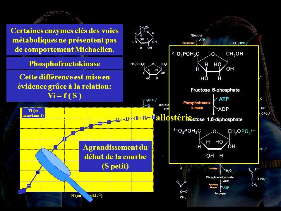 4.2.1 allost * 4.2.1. Manifestation de l'allostérie.