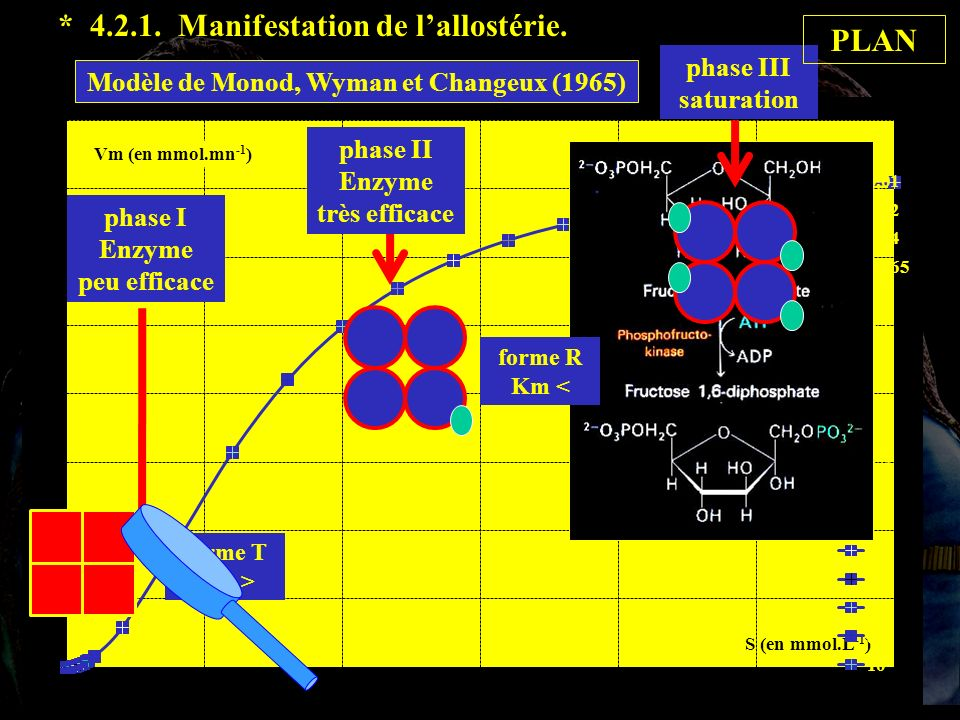 4.2.1 suite * 4.2.1. Manifestation de l'allostérie. PLAN phase III