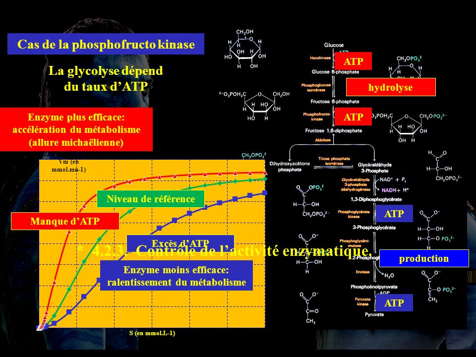 4.2.3 * 4.2.3. Contrôle de l'activité enzymatique.