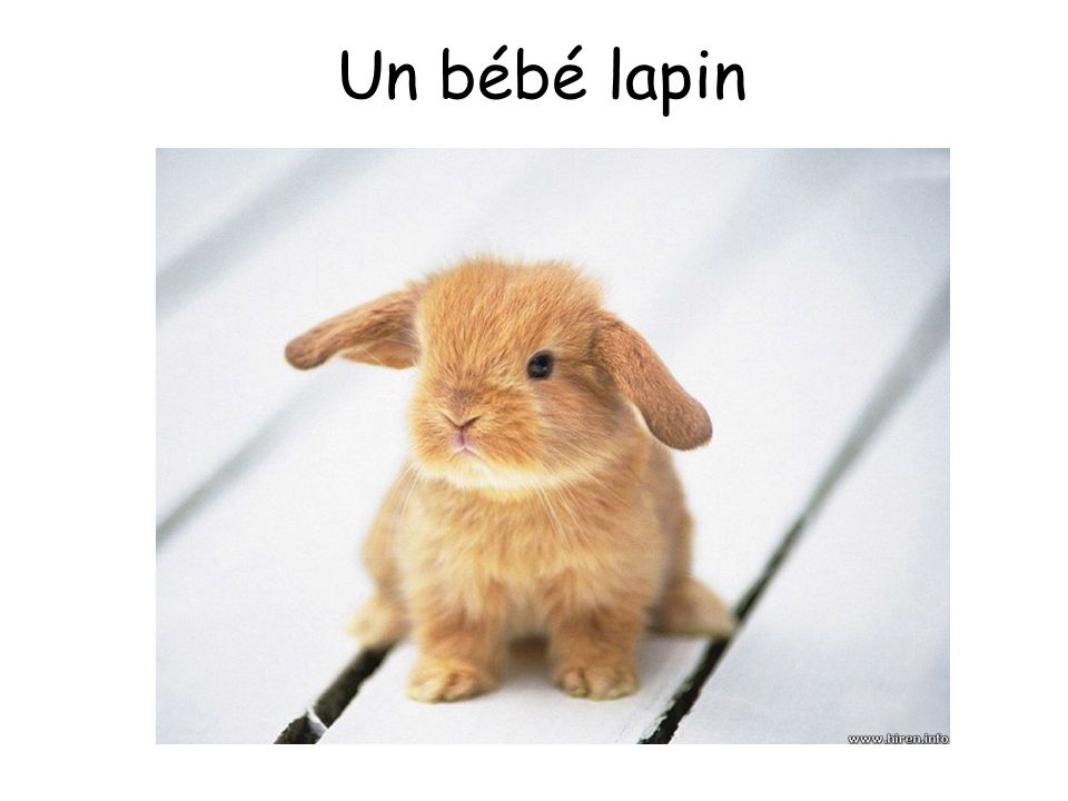 Un bébé lapin The sound is actually a snowball!