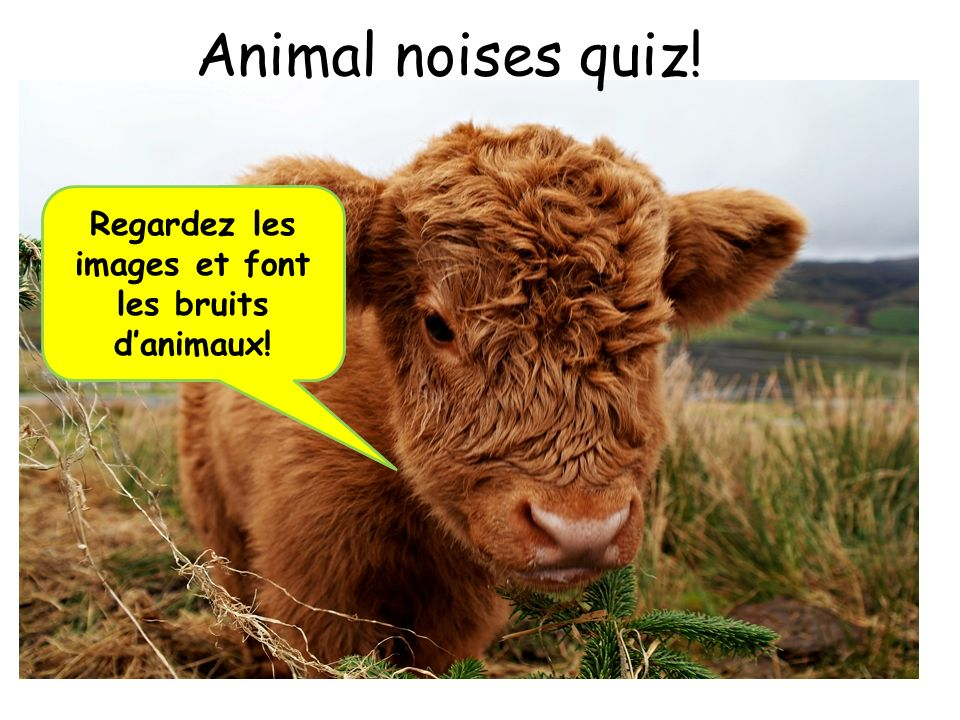 Regardez les images et font les bruits d'animaux!