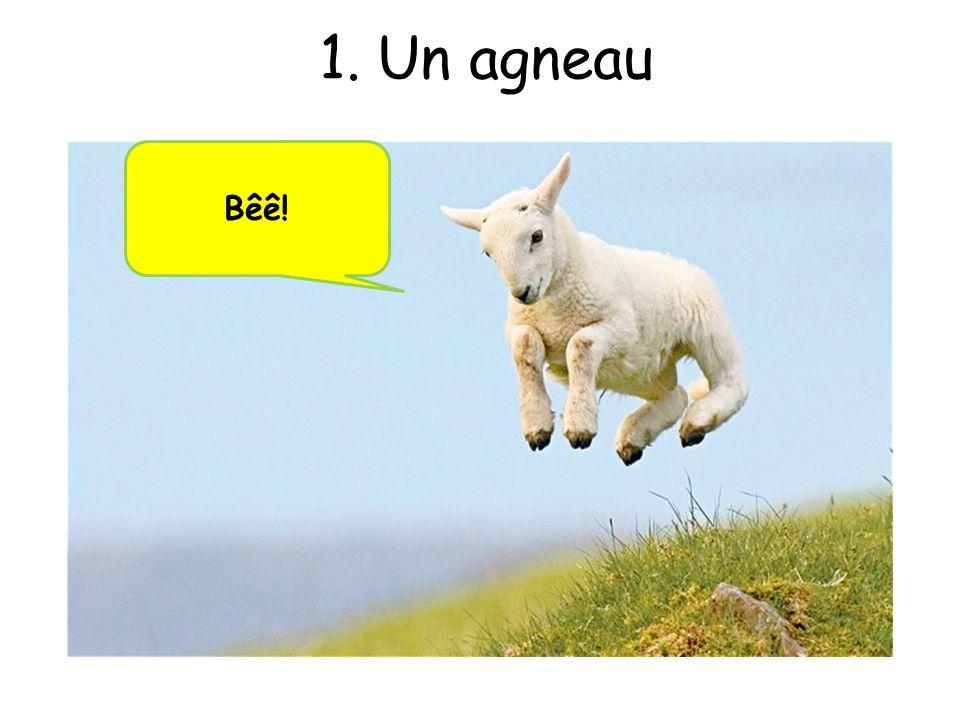 1. Un agneau Bêê!