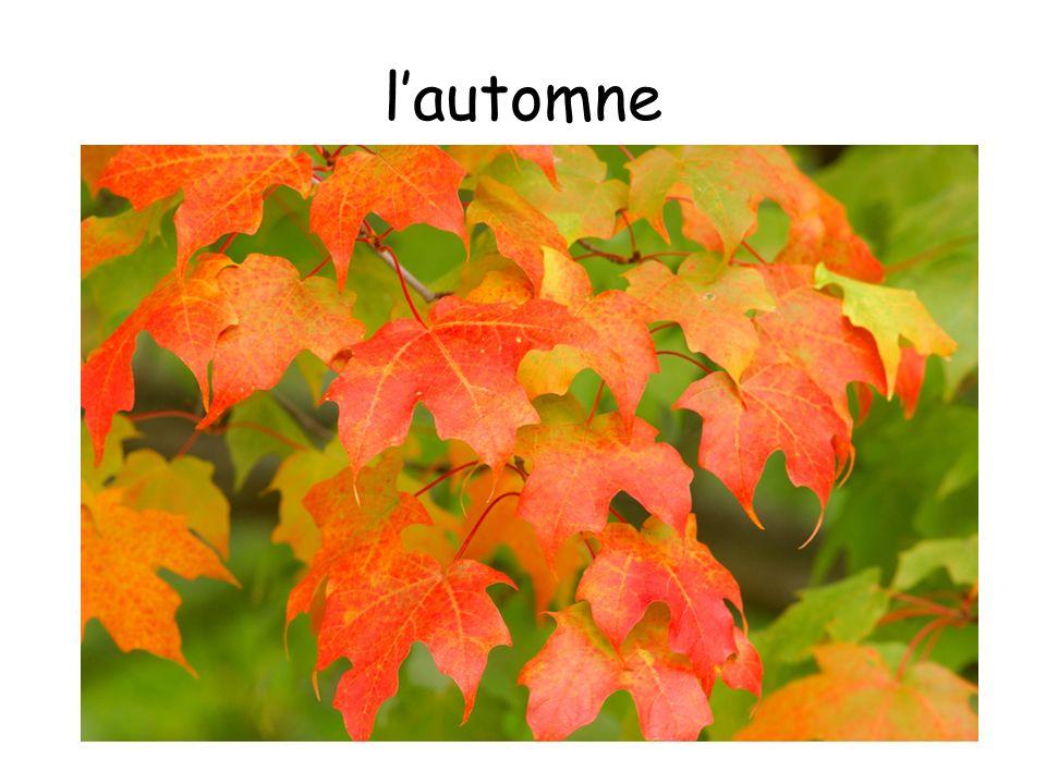 l'automne Autumn