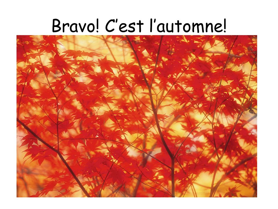 Bravo! C'est l'automne! Yes, it is Autumn!