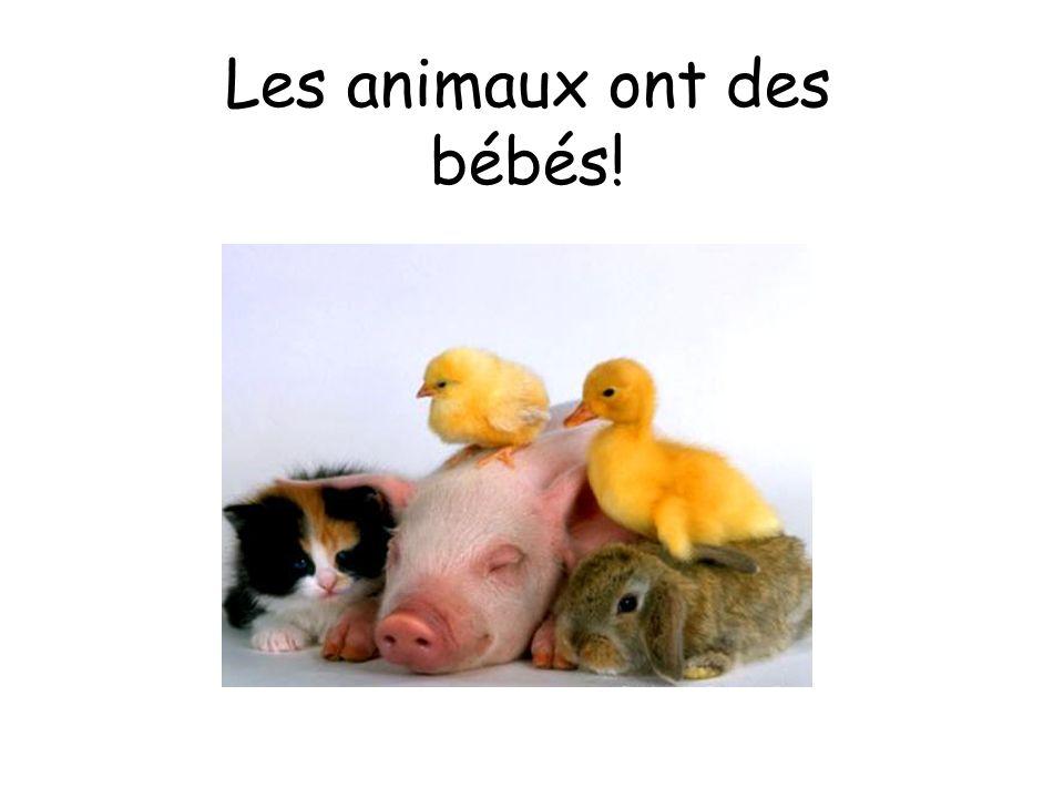 Les animaux ont des bébés!