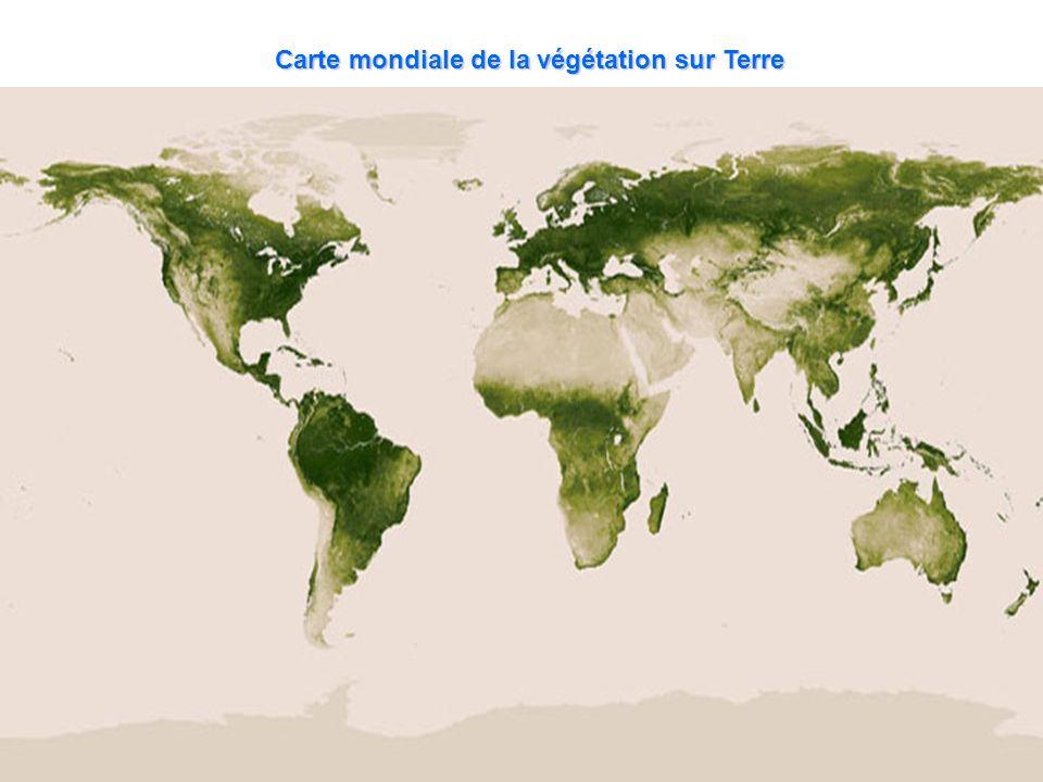 Carte mondiale de la végétation sur Terre