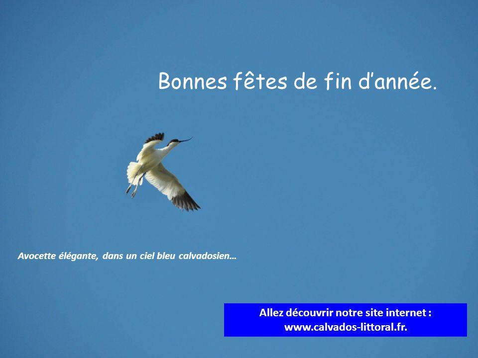 Allez découvrir notre site internet : www.calvados-littoral.fr.