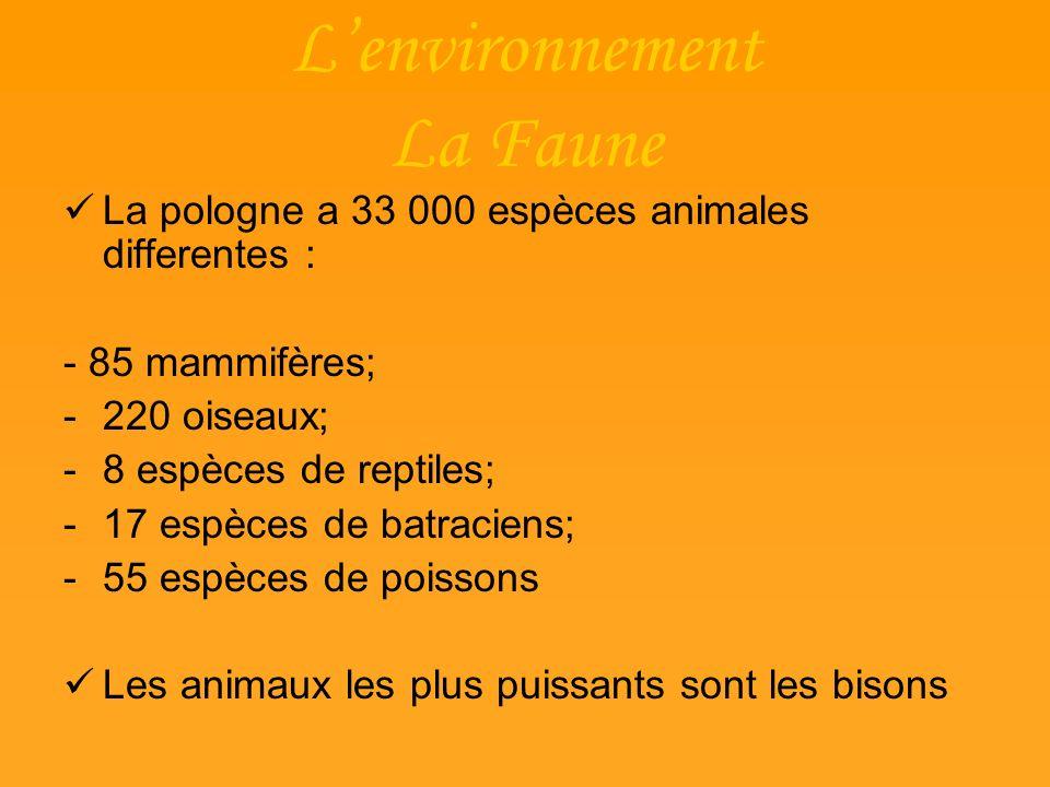 L'environnement La Faune