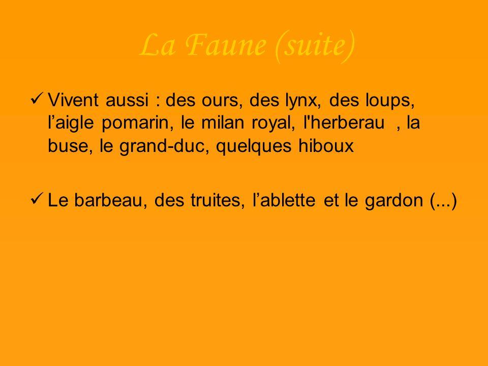 La Faune (suite) Vivent aussi : des ours, des lynx, des loups, l'aigle pomarin, le milan royal, l herberau , la buse, le grand-duc, quelques hiboux.