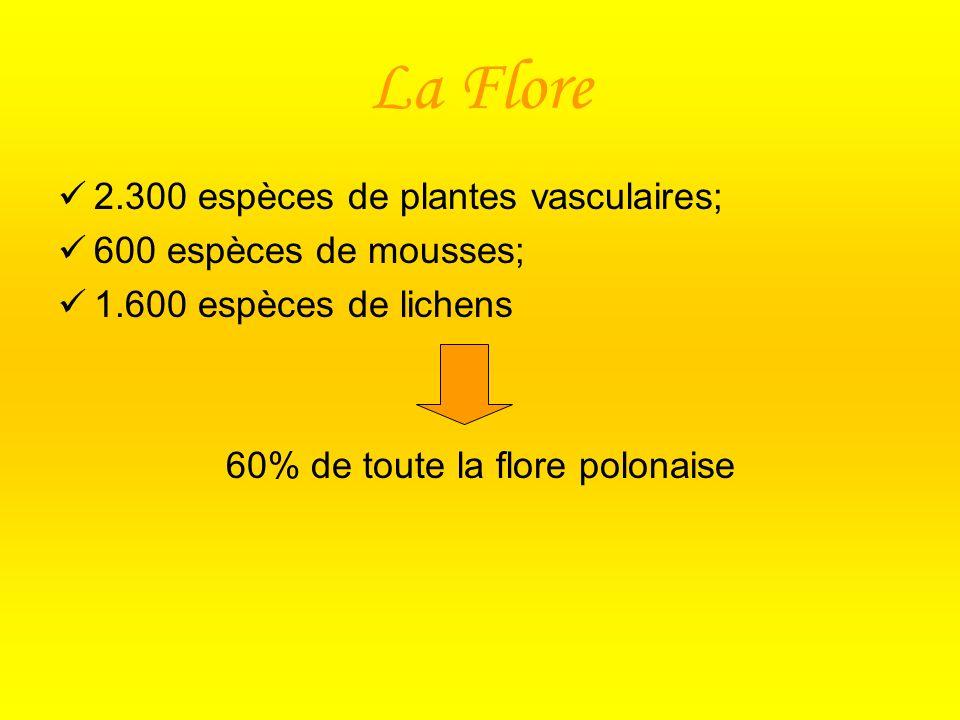 60% de toute la flore polonaise