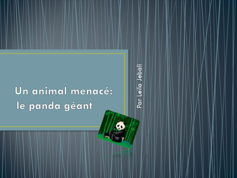 Un animal menacé: Par Leïla Jebali le panda géant