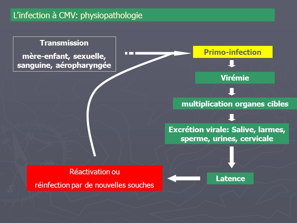 L'infection à CMV: physiopathologie
