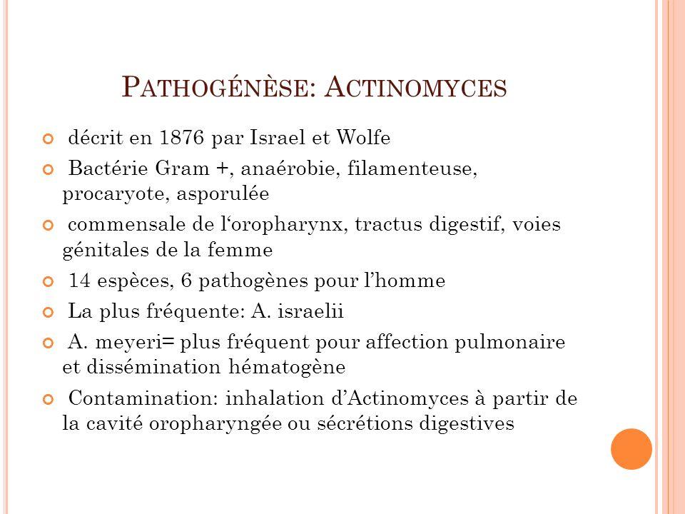 Pathogénèse: Actinomyces