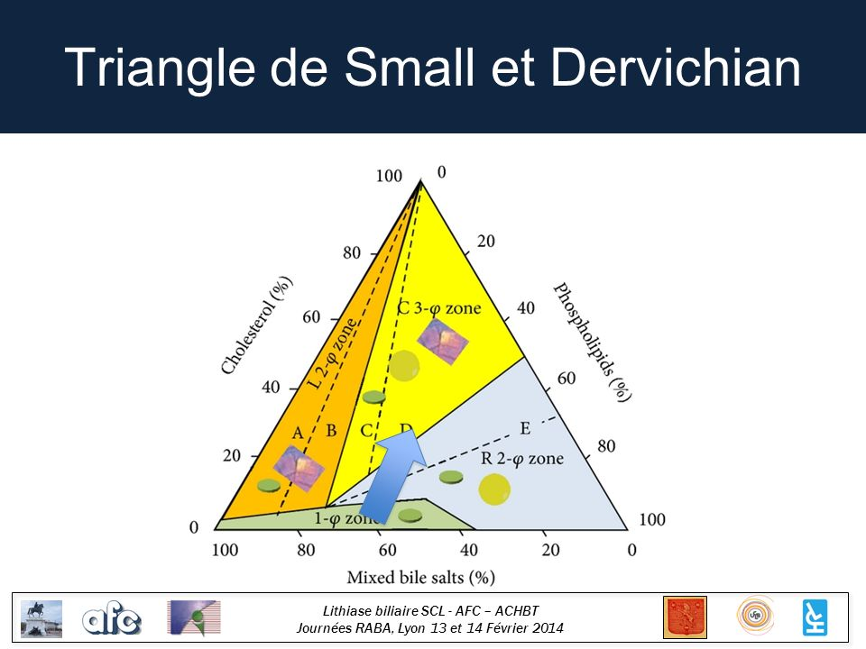 Triangle de Small et Dervichian