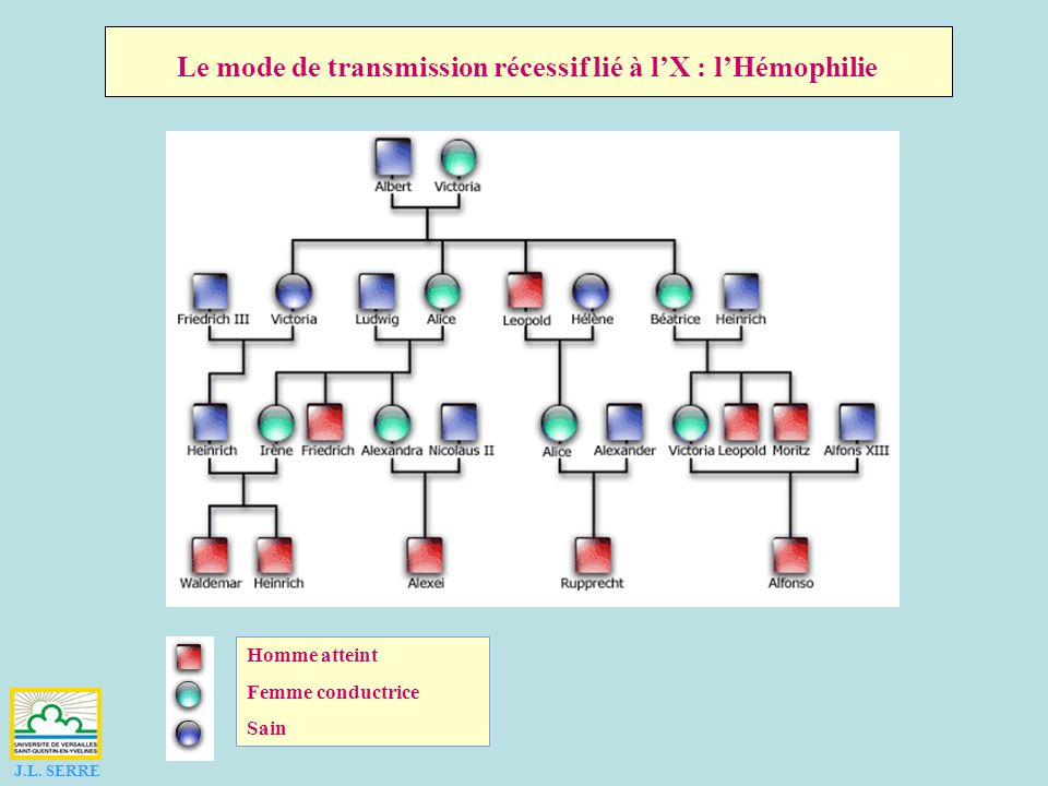 Le mode de transmission récessif lié à l'X : l'Hémophilie