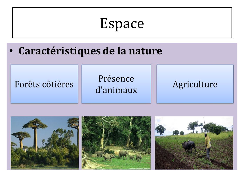 Espace Caractéristiques de la nature Forêts côtières
