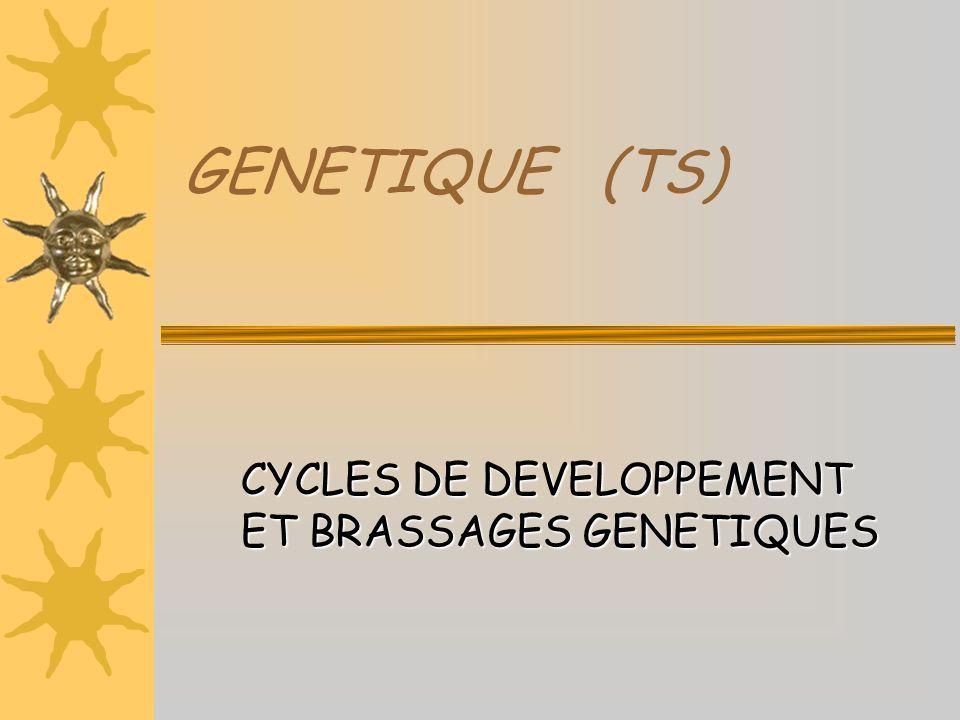 CYCLES DE DEVELOPPEMENT ET BRASSAGES GENETIQUES