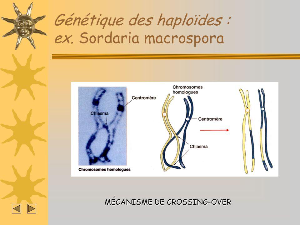 Génétique des haploïdes : ex. Sordaria macrospora