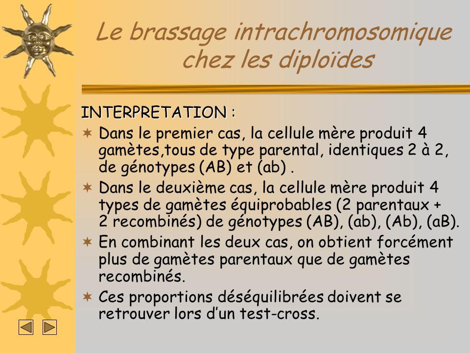 Le brassage intrachromosomique chez les diploïdes