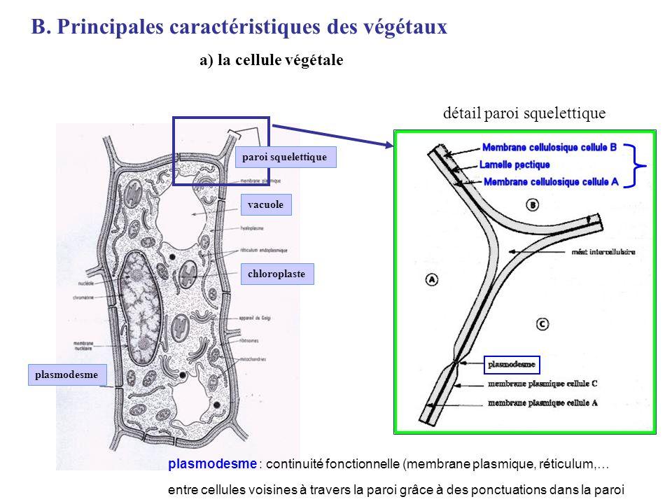 B. Principales caractéristiques des végétaux