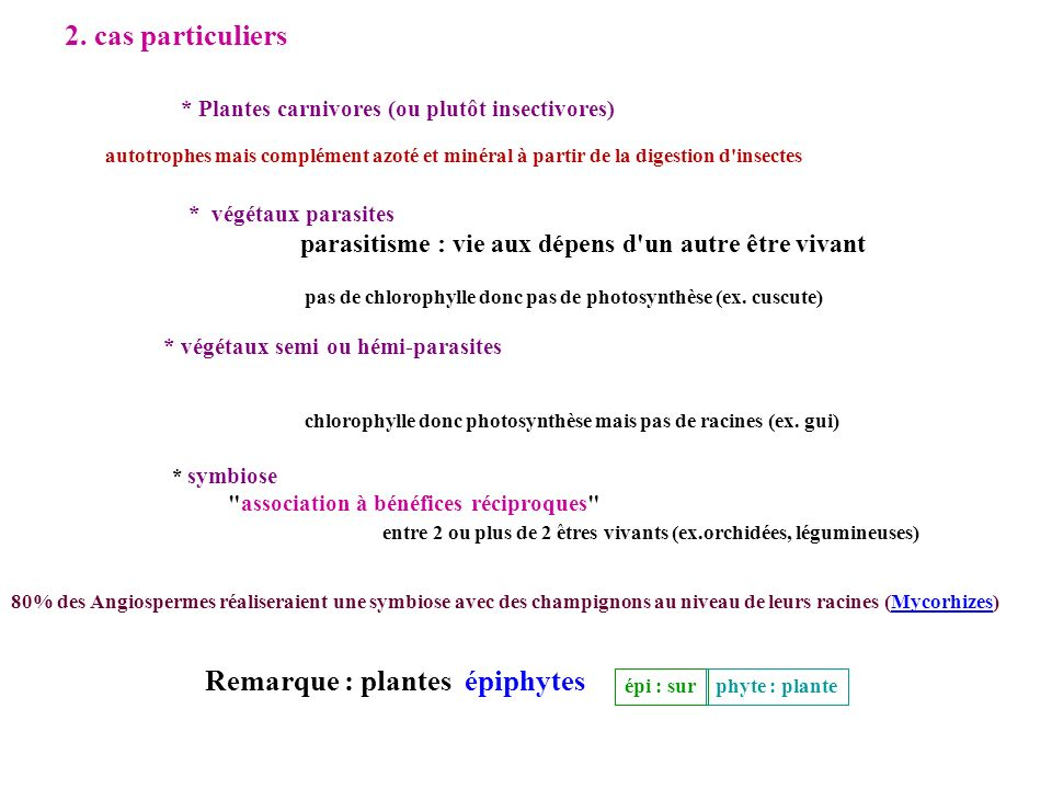 Remarque : plantes épiphytes