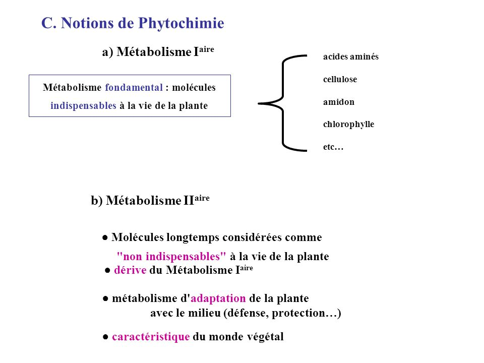 C. Notions de Phytochimie