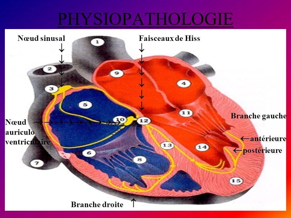 PHYSIOPATHOLOGIE   antérieure postérieure Nœud sinusal