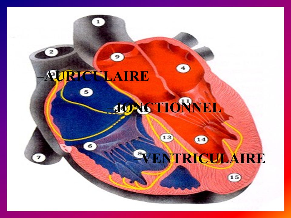 AURICULAIRE JONCTIONNEL VENTRICULAIRE