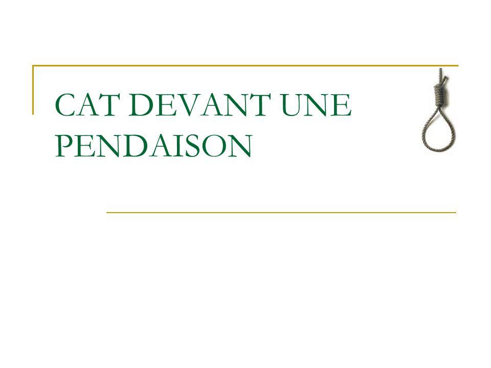 CAT DEVANT UNE PENDAISON