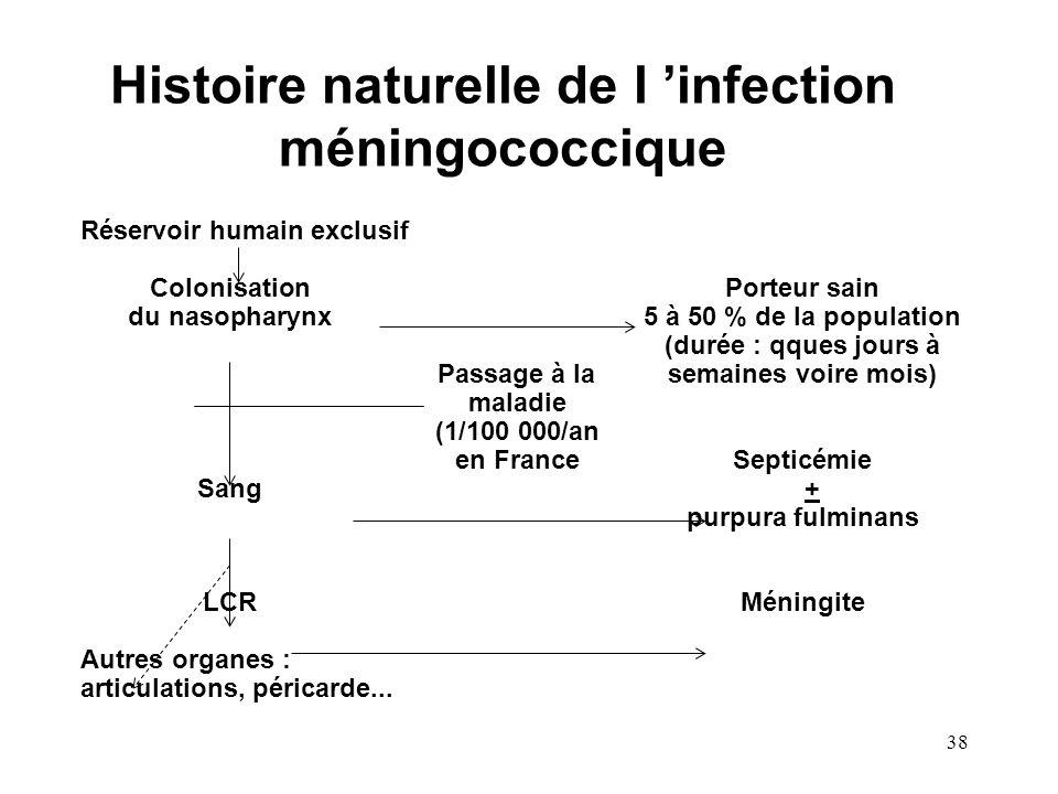 Histoire naturelle de l 'infection méningococcique