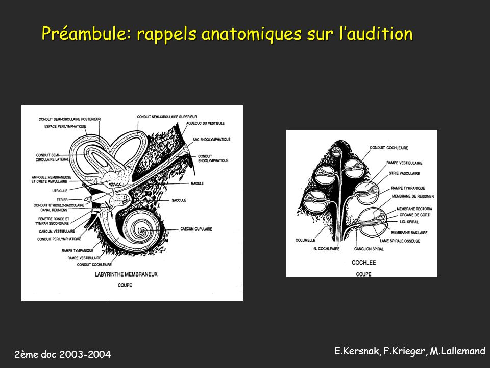 Préambule: rappels anatomiques sur l'audition