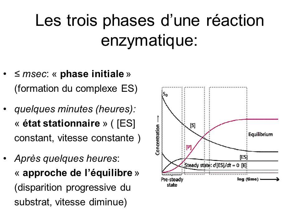 Les trois phases d'une réaction enzymatique: