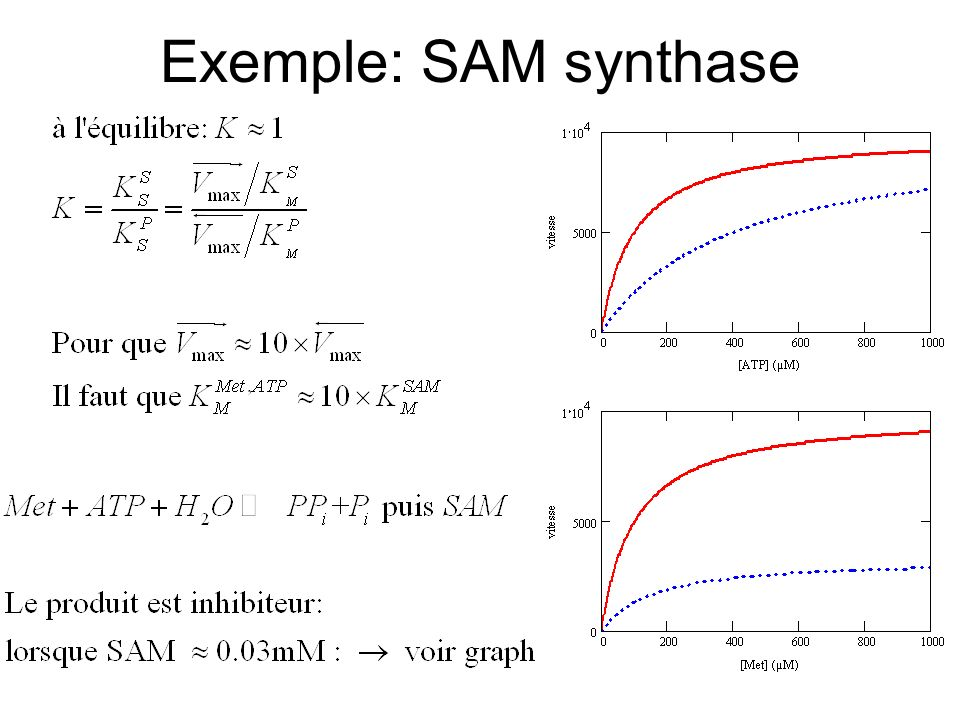 Exemple: SAM synthase