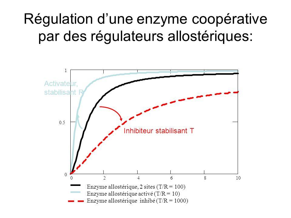 Régulation d'une enzyme coopérative par des régulateurs allostériques: