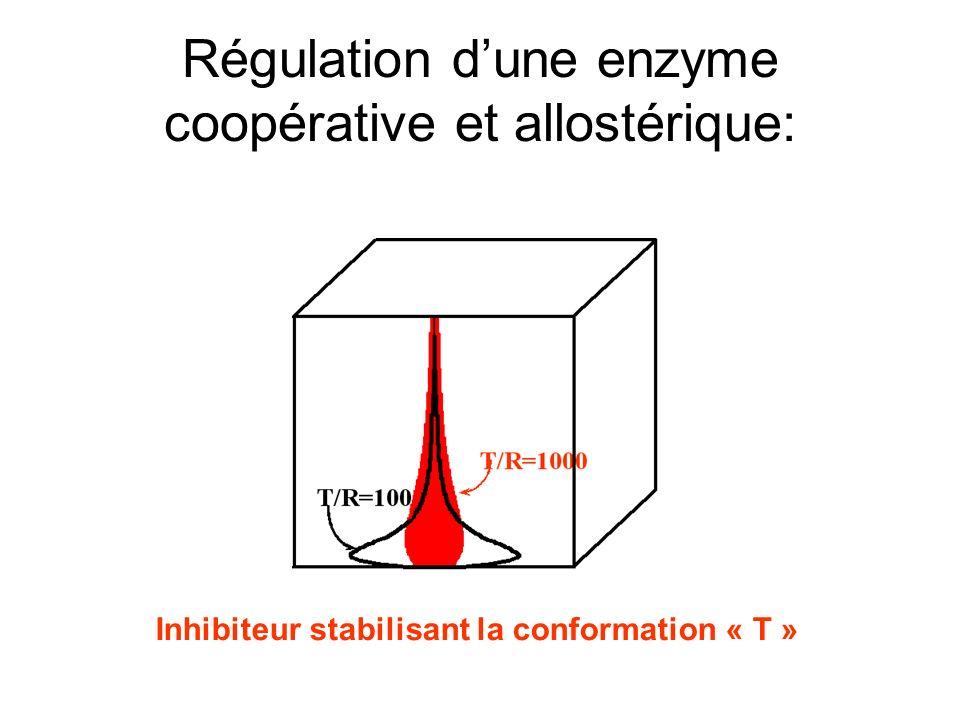 Régulation d'une enzyme coopérative et allostérique: