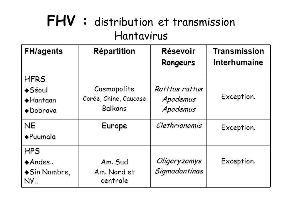 FHV : distribution et transmission Hantavirus