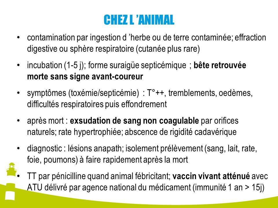 CHEZ L 'ANIMAL contamination par ingestion d 'herbe ou de terre contaminée; effraction digestive ou sphère respiratoire (cutanée plus rare)