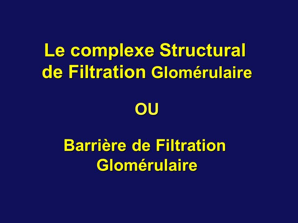 Le complexe Structural de Filtration Glomérulaire