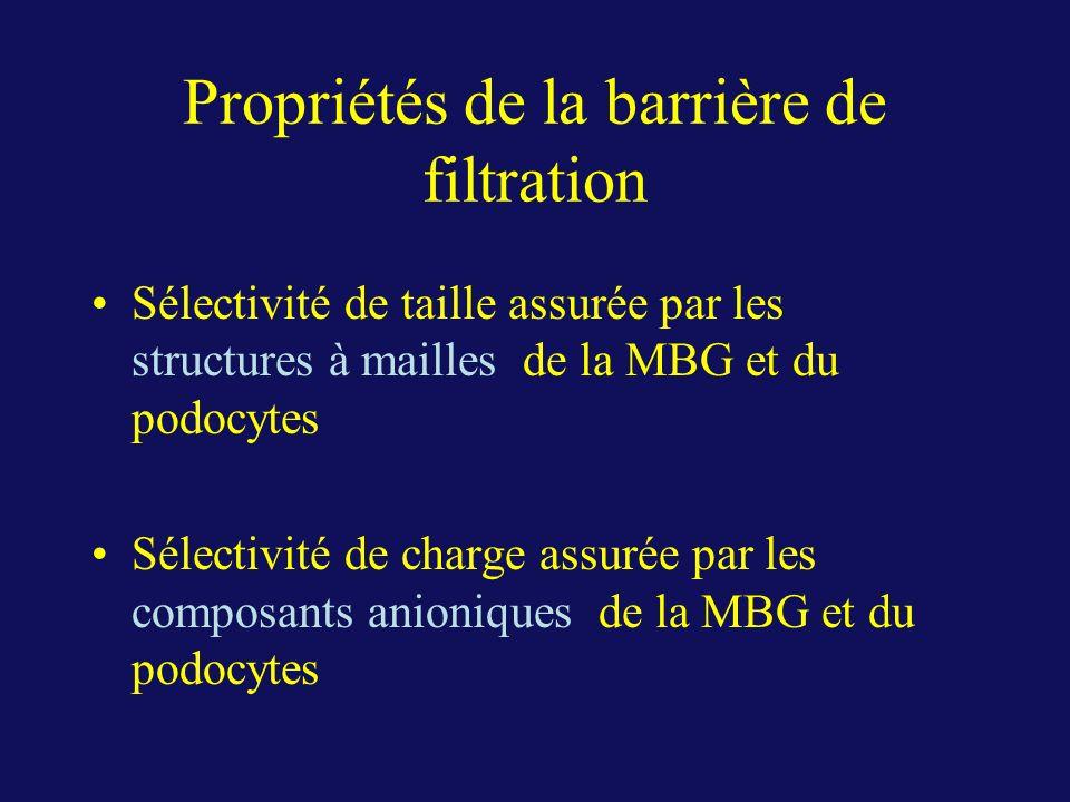 Propriétés de la barrière de filtration