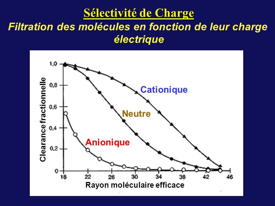 Filtration des molécules en fonction de leur charge